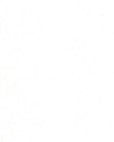 белый премиум W1000 ST9, ST19, S38